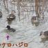 身近な 🐦鳥達