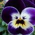 花の写真大好き