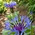 ココのお庭の花と山野草