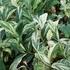我が家の植物たち