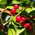 秋冬の実物を撮ってみた! ~赤やら、黄色やら、カラフルな実物の饗宴~