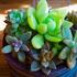 多肉植物と多肉の花達