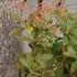 庭の花 2