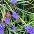 「花と季語」綴り帖と国花