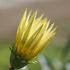 冬・・・庭に咲き季節を彩る花(12月〜2月撮影)