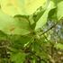 里山の植物 樹木 2018年