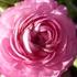 2月の花。