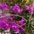 第26回「洋ラン展」 京都府立植物園