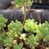 真冬の植物公園の温室めぐりと、マンドラゴラと、早春の花木