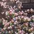 2018年4月〜春の庭