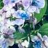 てんこの花づくり(藤沢の庭)2018夏🌼