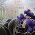 小さき庭の花もの語り
