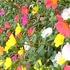 9月~季節は秋~冬へ…🌸花便り