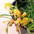 【ショップ】オーストラリア、南アフリカの珍しい植物を販売