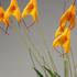 【植物図鑑】エリデスなど6種類の植物情報追加