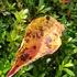 秋み一つけた!🍁🍂