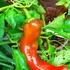 藤沢の野菜畑🥕