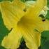 カボチャのお花でした。🌸