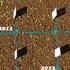 コノフィツムの種子保存と発芽率(ブルゲリ編)