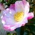 花が咲いています。No.2(1001~)
