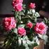 お花が好きです!