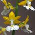 2012秋企画第2弾「植物[i:218]動物」生き物の名前がつく植物って何がある?