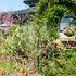 Today's My Garden