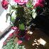 ベランダガーデンニングに向く花
