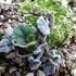 春を待つ植物の様子は?