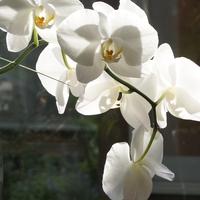 花遊び・文字遊び🌺 我が家のお花達でポ...