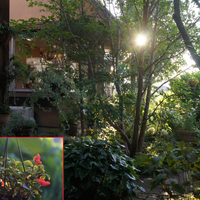 🏠昨日の朝陽があたる庭から・・🌼🌳早朝5...