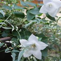 🏠今週の庭から・・🌼 寄せ植えにして2年...