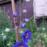 花第1号は青🌼