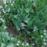 咲き終わったチューリップの葉と共演