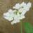 8月25日  開花