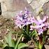 terano-garden