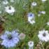 種から育てた草花