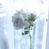 花遊び&花つながり