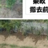 貸農園20160819