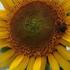 夏休み限定企画「お花のネットショッキング」次は何を指名する?