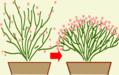 花の床屋 PART-1