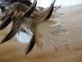 T.メラノクラテルを種から育てる記録