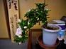 サツキ盆栽づくり