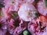 ソフトな色彩とシルキーなお花のポピーなの
