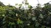植物の生きる力を信じた手抜き園芸