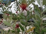 トロピカルな花と果実