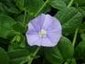 さわやかな色の花