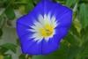 初めての種まき~花が咲くまで…。(^o^)