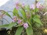小さなちいさな花