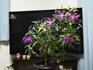 冬の室内を彩る花に感謝♪